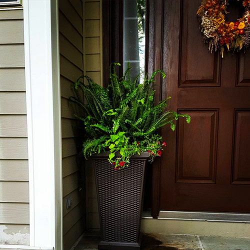 Front Entry Plant and Pot