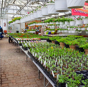 Greenhouse Plants and Shrubs